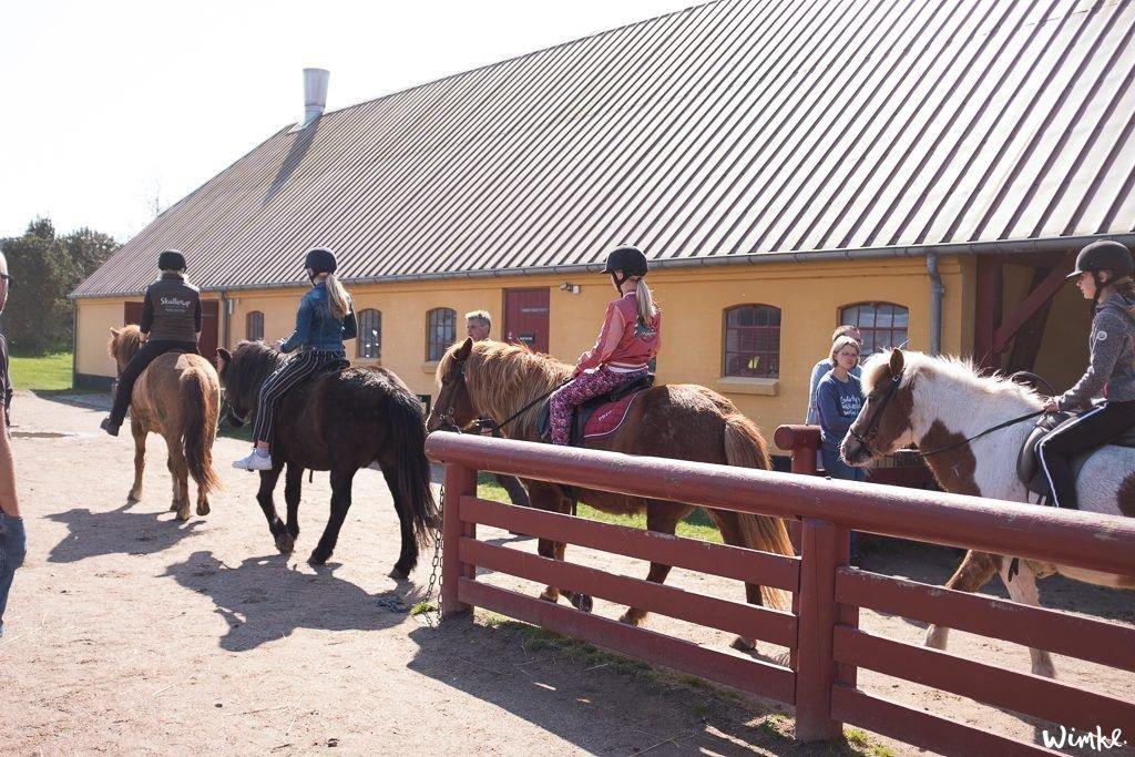 Paardrijden op het strand van Noord Jutland